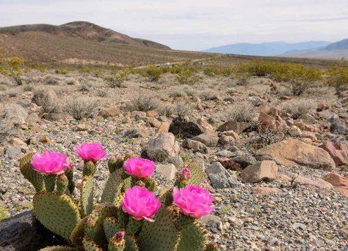 Il DiSTABiF coordina Il progetto 'Life Desert-Adapt', contro il degrado ambientale
